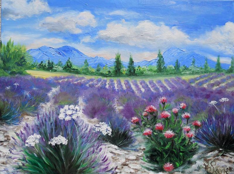 Floraison sur le plateau de Valensole
