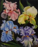 Iris pastels (VENDU)