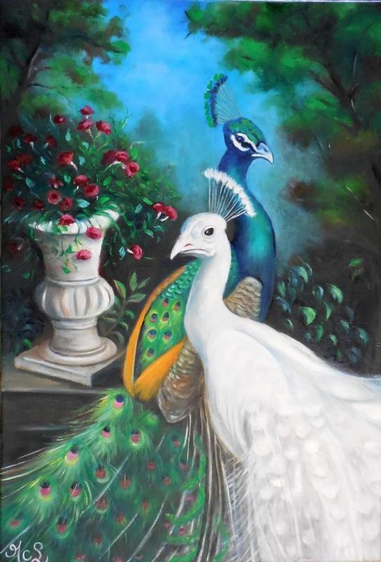 Paons bleu et blanc